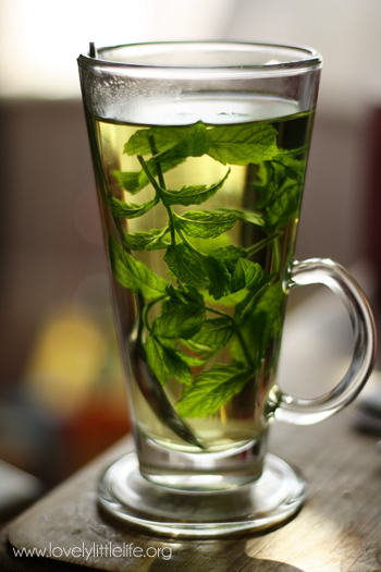 Fresh Mint Tea Recipe — Dishmaps